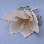 Image of R64   Magnolia
