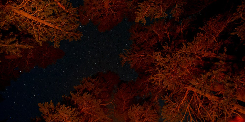 Image of Campfire Trees - 10x20 canvas print