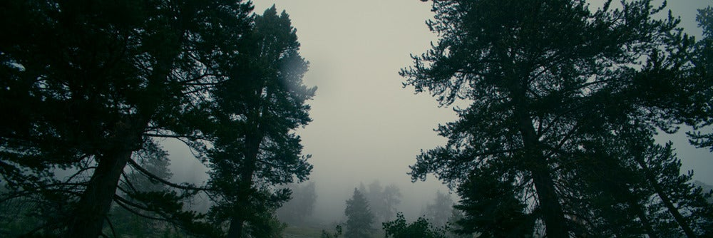 Image of Trees in the Mist - 20x60 canvas print