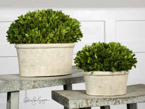 Image of Preserved Boxwoods