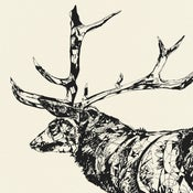 Image of Susie Wright- Standing Stag- Limited Edition Screenprint