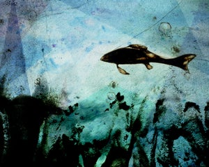 Image of Beneath the Surface - 8x10 limited edition print