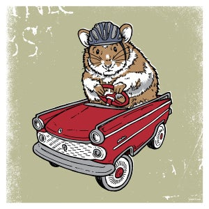 Image of Hamster, Guinea Pig Critter Print