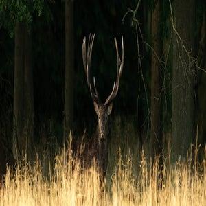 Image of Denmark - Deer