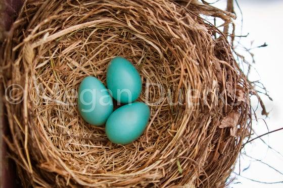 Image of Nest Print