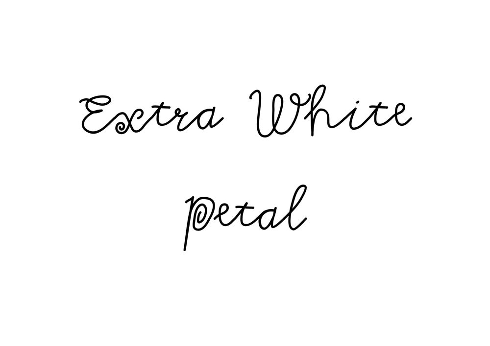Image of Extra White Petal