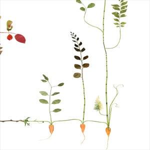 Image of Garden Tree / Trädgårdsträd New!
