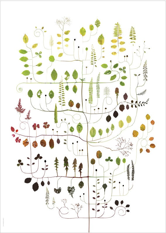 Image of Beech Tree / Boken