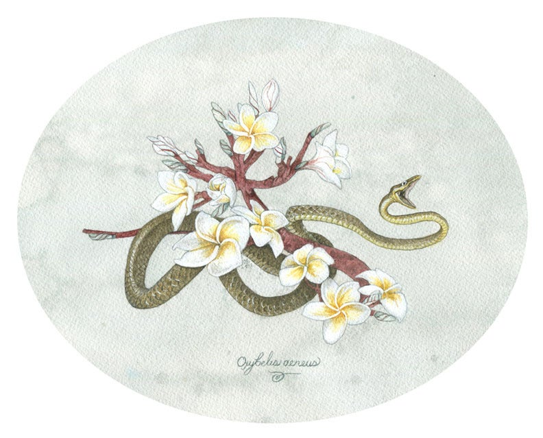 Image of Original Artwork: Brown Vine Snake and Plumeria