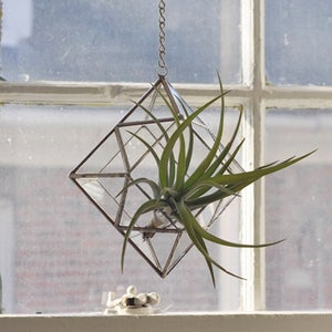 Image of Zephyrus Terrarium, limited edition