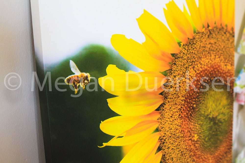 Image of Bee in Flight Canvas